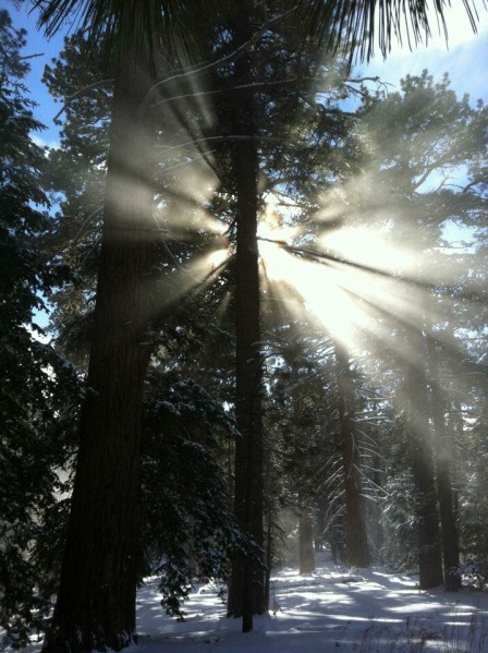 sunlight on trees in snow